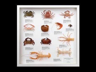 Marine Crustaceans of Europe