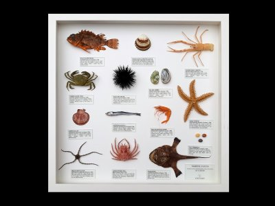 Marine Fauna of Europe